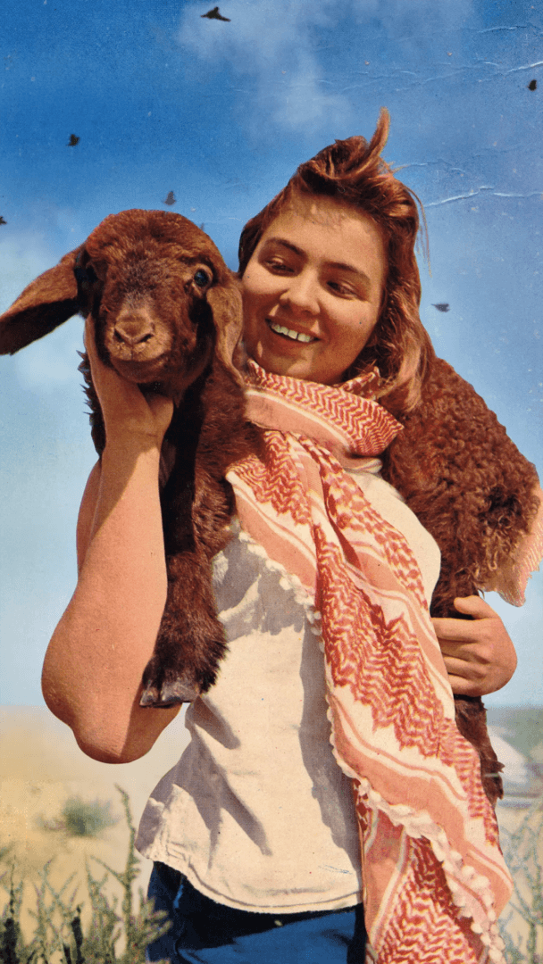 איילת אלבנדה, גלויה מונפשת, 2018