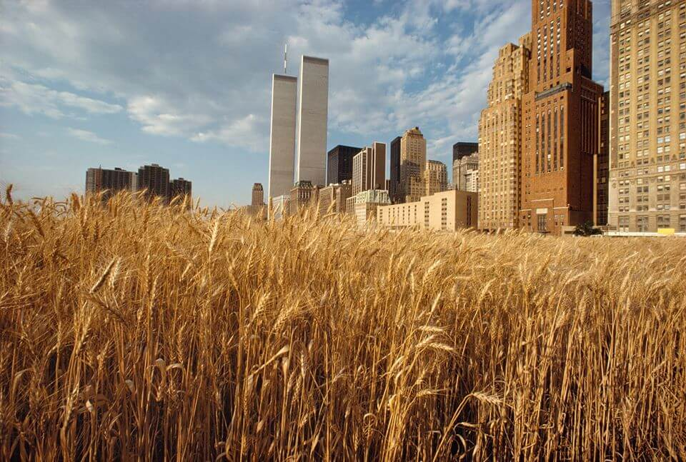5_Agnes Denes, Wheatfield- A Confrontation, 1982, Photo by The Shes