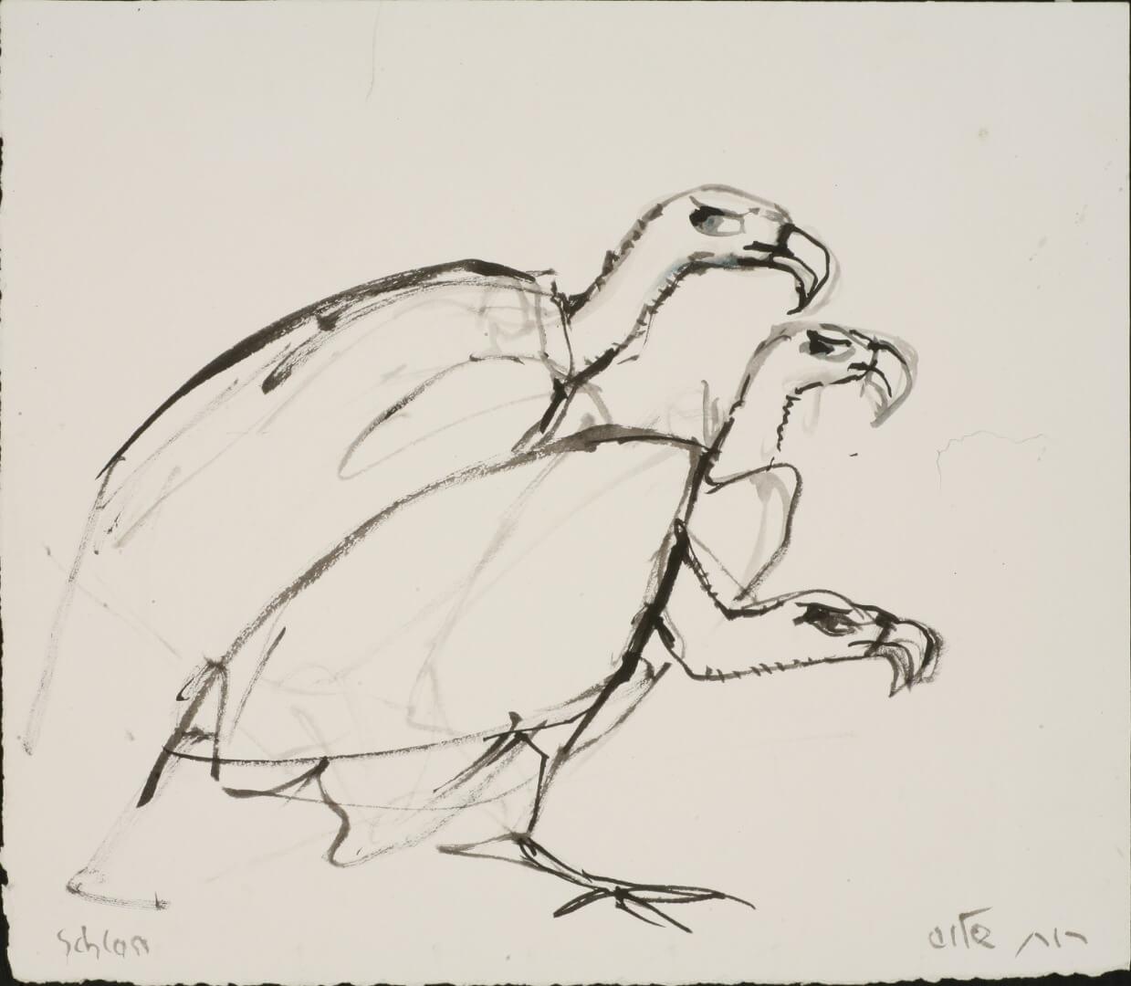 רות שלוס - עופות דורסים 2